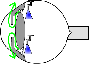 aqueous fluid is made in the middle chamber of the eye (in the ciliary body) and flows into the front chamber, and then out of the eye, through a drainage system